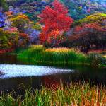"""""""Pond at Lost Maples State Park"""" by MichaelTidwellPhotography"""
