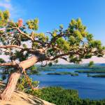 """Windswept Pine over Squam Lake, Holderness NH"" by RoupenBaker"