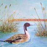 """""""Duck"""" by amsole"""