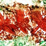 """dragonfly love imagekind"" by paulyworksfineart"