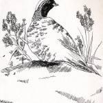 """Bird2"" by amsole"