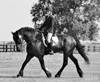 © CBp BW DRESSAGE
