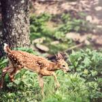 """Whitetail Deer-Little One (1)"" by JZaringPhoto"