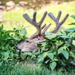 """Whitetail Deer-Get Some Rest (2)"" by JZaringPhoto"