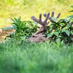 """Whitetail Deer-Get Some Rest (1)"" by JZaringPhoto"