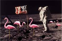 Neil Armstrong And Flamingos on The Moon