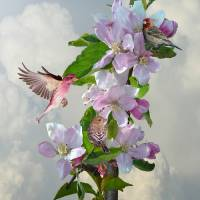 Finches in Blooming Apple Tree Art Prints & Posters by I.M. Spadecaller