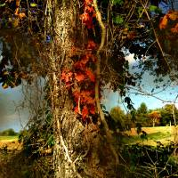 Druid Oak Art Prints & Posters by RC deWinter