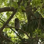 """""""Owl"""" by BlueAngel12"""