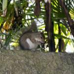 """""""Squirrel"""" by BlueAngel12"""