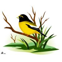 Evening Grosbeak Art Prints & Posters by Pixel Paint Studio