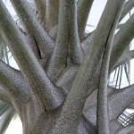 """""""Palm Trunk"""" by BlueAngel12"""