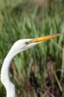Our Friendly Egret