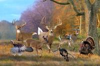 Whitetail Deer Art - Field of Dreams
