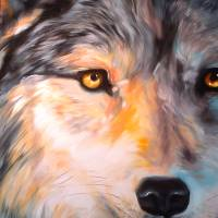 Half Wolf 2420 Art Prints & Posters by Marcia Baldwin