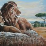 African Lions- The Bachelors