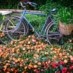 """flowers_bike"" by fielding"