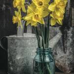 """daffodil shed2 copy"" by fielding"
