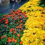 """""""flowers_bridge"""" by fielding"""