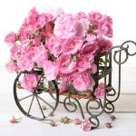 """rose_cart"" by fielding"