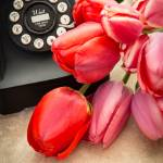 """Tulips and Telephone"" by fielding"