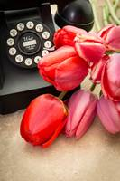 Tulips and Telephone