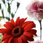"""Flowers alive"" by droopydogajna"