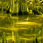 """Swamp II"" by picturesbybgale"