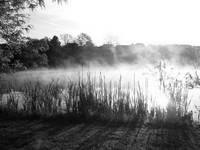Foggy Pond at Boettler Park