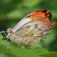 """Butterfly on Leaf"" by Jason Thomas Salisbury"