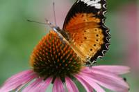 Butterfly on Flower No. 2