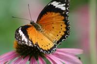 Butterfly on Flower No. 10