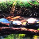 """Turtle Conga"" by MelissaAlexander"