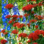 """Garden Glow"" by vpicks"