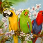 """The Three Tenors- Parrots and Orchids by Violano"" by stella"