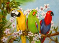 The Three Tenors- Parrots and Orchids by Violano