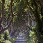 """Dark Hedges"" by stephenmaxwell"