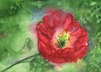 Poppy in Green and Red Greeting Card