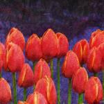 """janes tulips"" by rchristophervest"