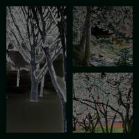 Tree 2 Collage