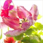 """SunnyParrotTulip"" by judystalus"