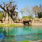 """African Elephants"" by MelissaAlexander"