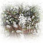 """Tree with White Flowers"" by patriciaschnepf"