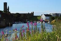 St Andrews Harbour and Pink Flowers