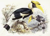Dichocerus Bicornis, 1876-1882 (hand-coloured lith