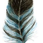 """feather"" by DanielaHartlHeisan"