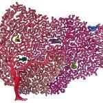 """""""red_coral"""" by DanielaHartlHeisan"""