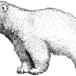 """""""curious_icebear_cub"""" by DanielaHartlHeisan"""