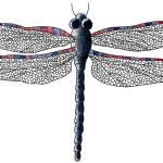 """dragonfly"" by DanielaHartlHeisan"