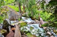 Babbling Brook in Mount Rainier